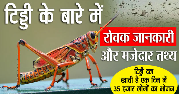 facts about grasshopper