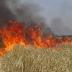 عين جلولة :حريق بضيعة  فلاحية خاصة