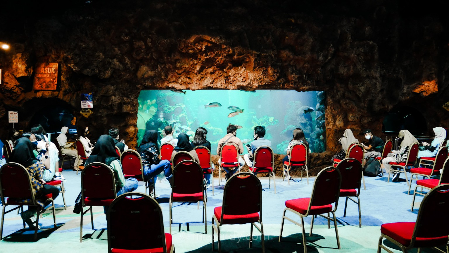 pertunjukan memberi makan ikan di seaworld