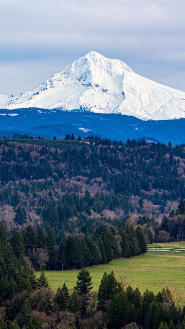 Field, grass, forest, mountain, snow