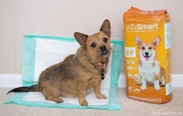 Jada and WizSmart Male Dog Potty Pads