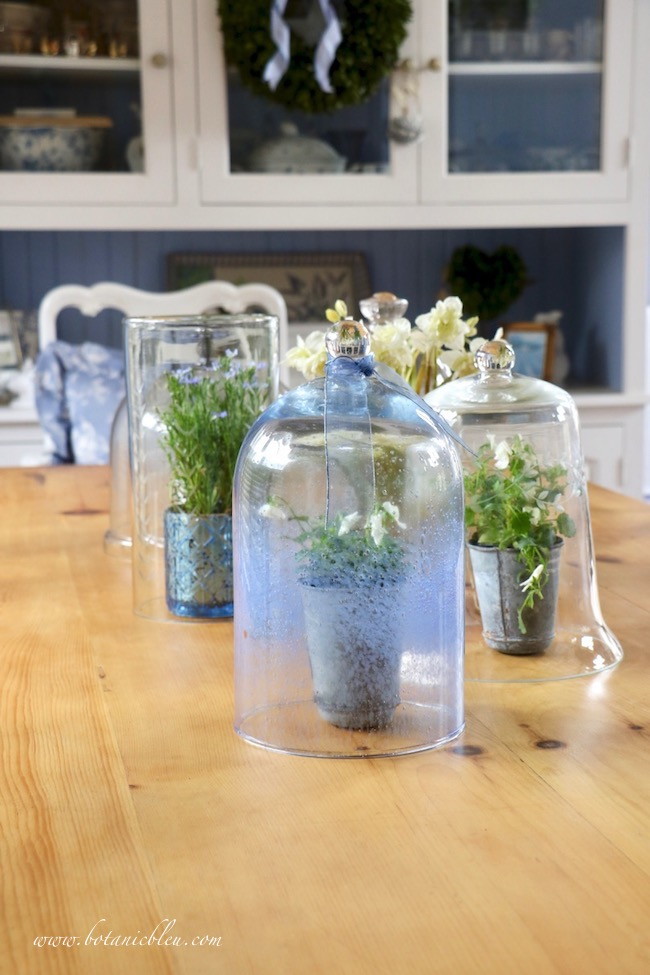 Spring Cloche Collection for French Country Style