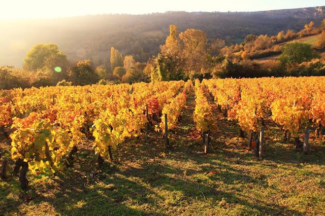 Vignes de Cormot, Bourgogne, (C) Greg Clouzeau