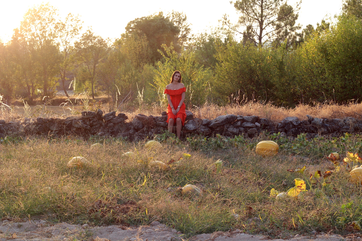 countryside pumpkin patch portugal summer