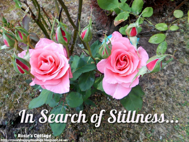 In search of stillness...