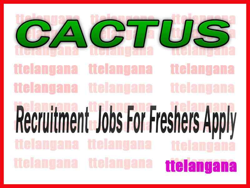 CACTUS Recruitment  Jobs For Freshers Apply