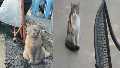Ini Maknanya Saat Kucing Mendekatimu bukan Orang Lain Saat Makan?