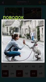 на улице девушка и собака на поводке касаются лапой с рукой