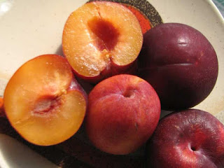 Pluot Fruit Pictures