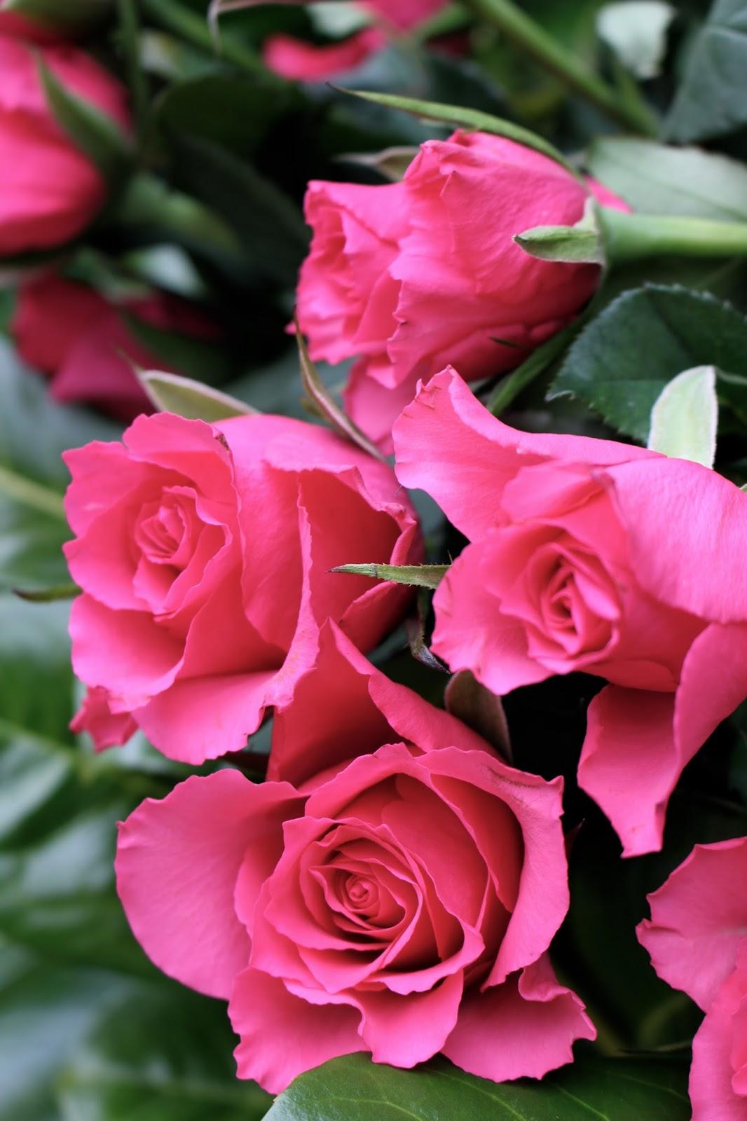 flower nature lifestyle photography blogger