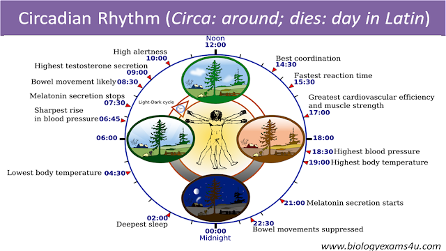 Explanation of Nobel Prize in Physiology or Medicine 2017- Molecular Mechanisms Controlling the Circadian Rhythm