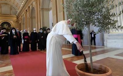 Pope plants tree