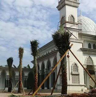 JUAL POHON PALEM KURMA TINGGI 4 METER , HARGA SUDAH BERIKUT ONGKOS KIRIM DAN PASANG