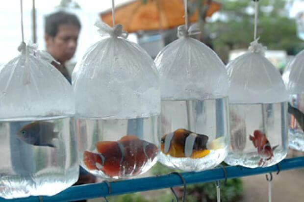Pasar Ikan Hias Di Bandung