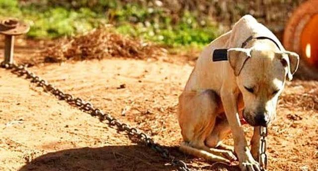 Homem é denunciado por maus-tratos contra cachorro em Roncador