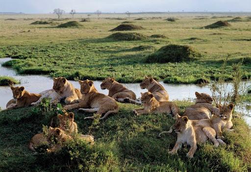 Leones rio mara kenia