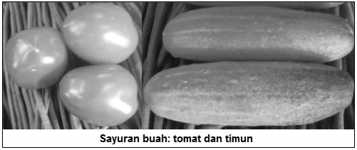 Sayuran buah: tomat dan timun - Sayuran buah (fruit vegetables) - Jenis Sayuran Berdasarkan Bagian Tanaman yang Dimakan