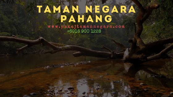 Pakej aktiviti taman negara pahang 2022