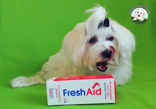 świeży oddech psa