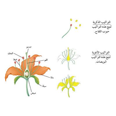 التكاثر فى النباتات الزهرية
