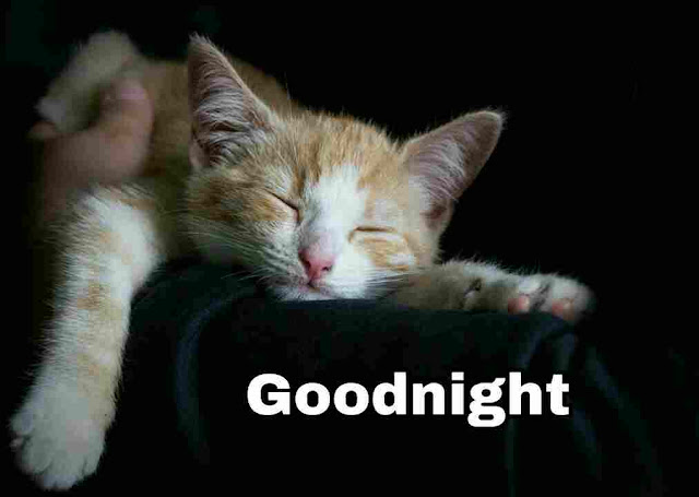 Good Night sleeping cat Images, Photos, Greetings and HD Pictures