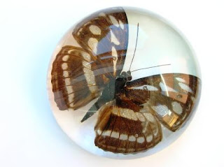 Custom made paperweight containing a Butterfly or Moth