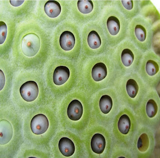 Evidence and theories about trypophobia: