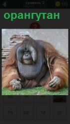 ответ на 2 уровень орангутан