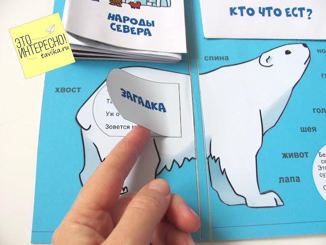 """Белый медведь в лэпбуке """"Арктика"""