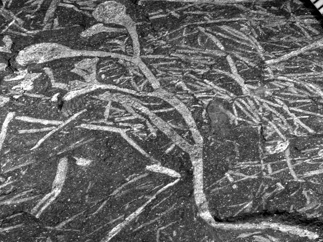 Oldest plant fossils on the African continent discovered