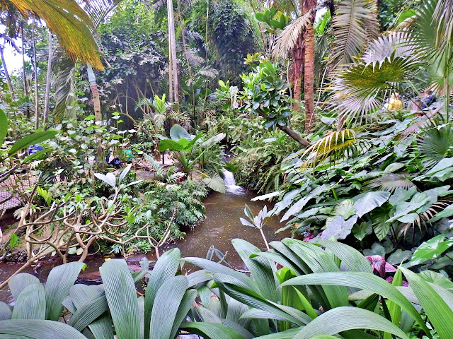 Inside the Rain Forest biome at the Eden Project, Cornwall