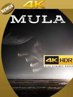 La Mula (2018)4K REMUX 2160p UHD [HDR] Latino [GoogleDrive]