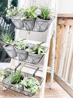 Plants on a ladder for home decor