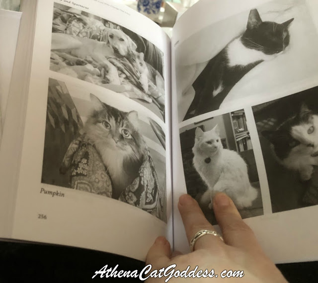 Kitty Karma Book Review