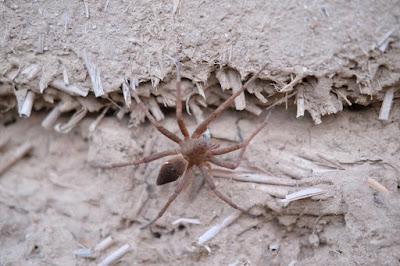 長野県生坂村 工芸と喫茶ひとつ石 里山の昆虫 カエルを食べる蜘蛛