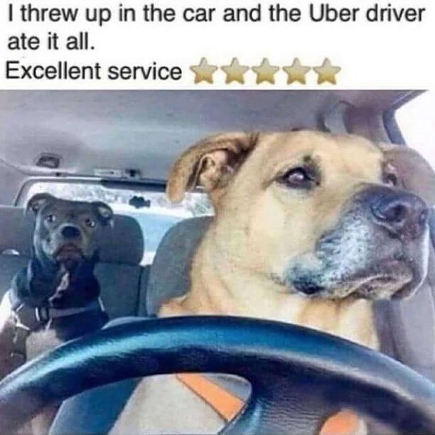 Dog Uber