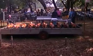 Ηλεία: Πρωτομαγιά με γουρουνόπουλα - Έτσι τηρούν το έθιμο στο δάσος