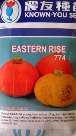 Waluh Orange, Waluh Jingga, Waluh Eastern Rise, Known You Seed,perawatan mudah,  rasa manis, daging tebal, kulit jingga,
