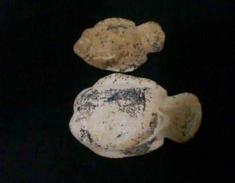Sepasang Fosil Ikan