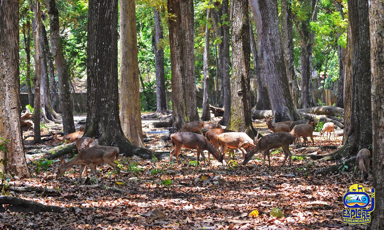 taman wisata alam dan cagar alam pananjung