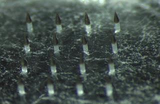 Κβαντικές κουκίδες νανοσωματιδίων και λουσιφεράση