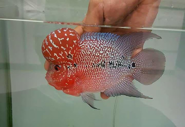 Woman Instructs Maid To Cook Fish For Dinner But Comes Home To Expensive Pet Fish At Their Dining Table!