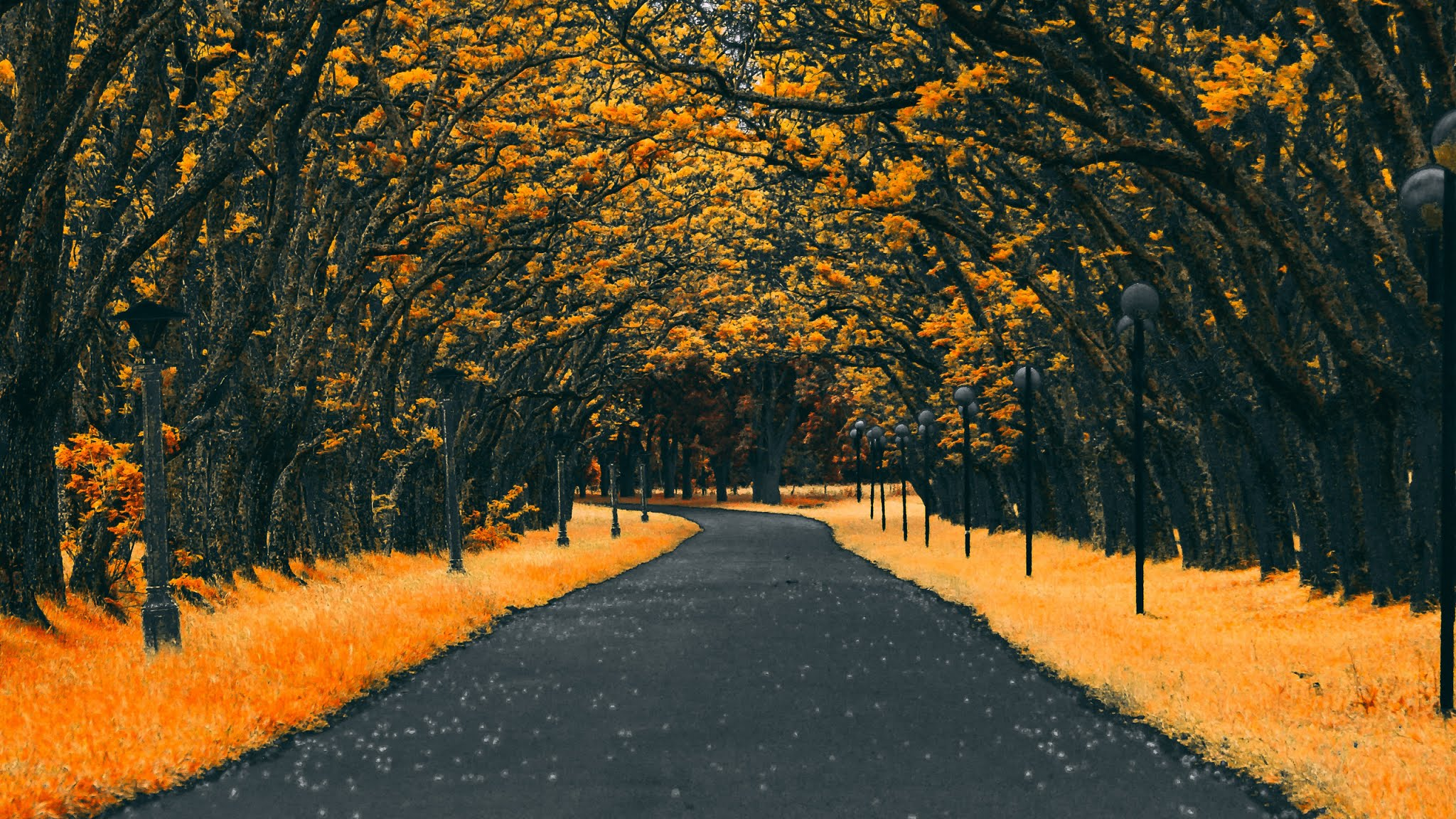 Autumn Road Nature 4k Wallpaper