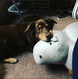 My pup and my hippo footstool