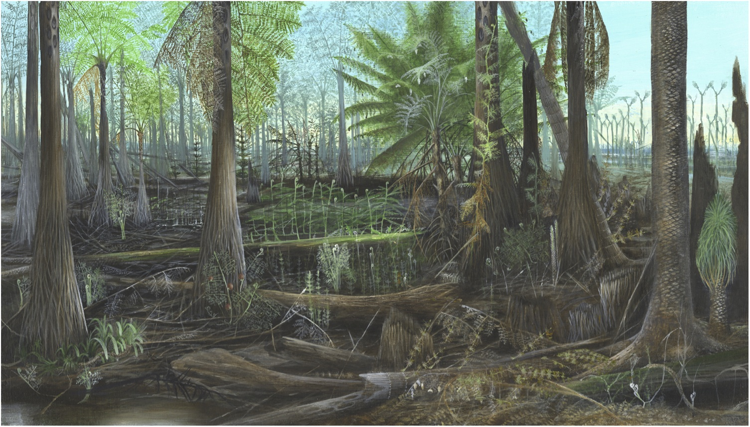 The Palaeo Post The Carboniferous Period