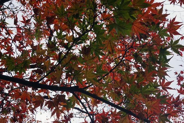 紅葉、福岡