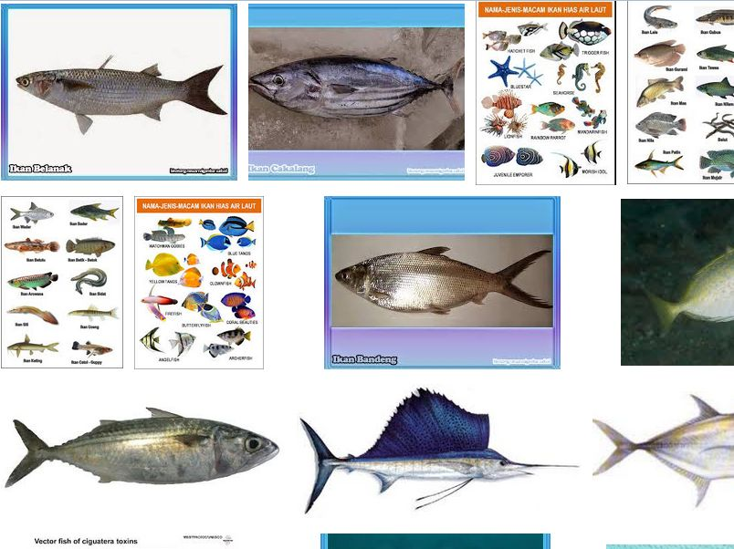 Nama-Nama Ikan Laut
