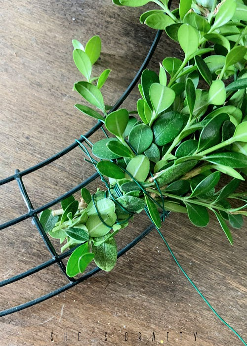 Attach boxwood bunches to wreath form with wire.