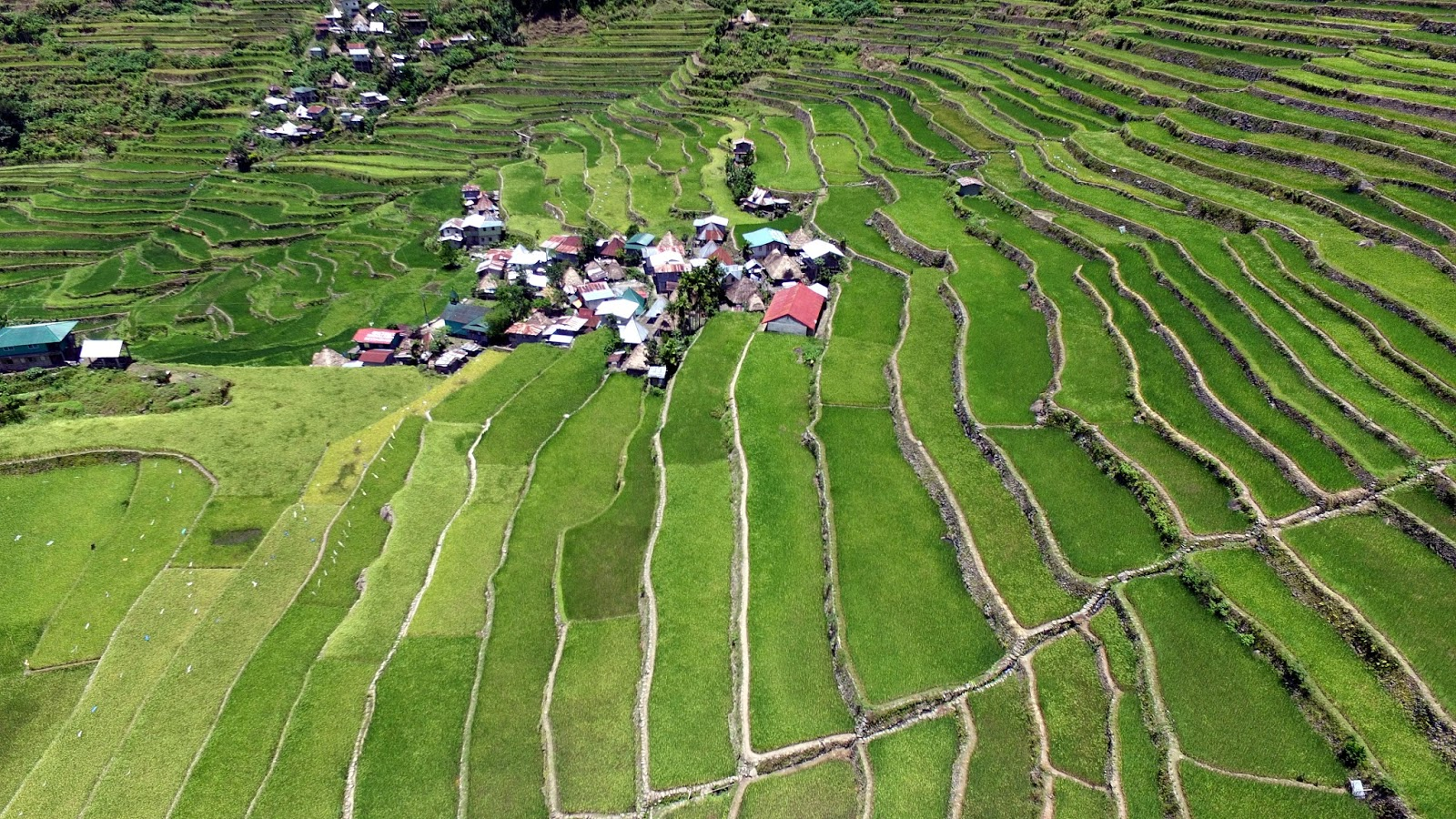 rice terraces in danger essay Cultural landscapes -- cultivated terraces on lofty mountains, gardens, sacred places  -- testify to the creative genius, social development and the imaginative and spiritual vitality of humanity they are part of our collective identity.