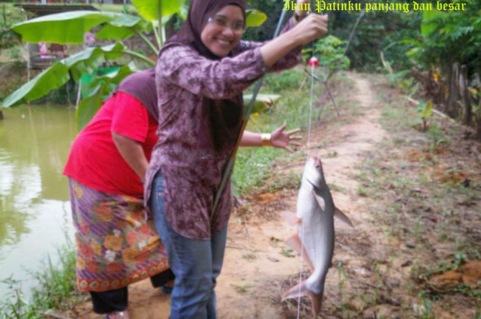 Mancing Ikan Patin